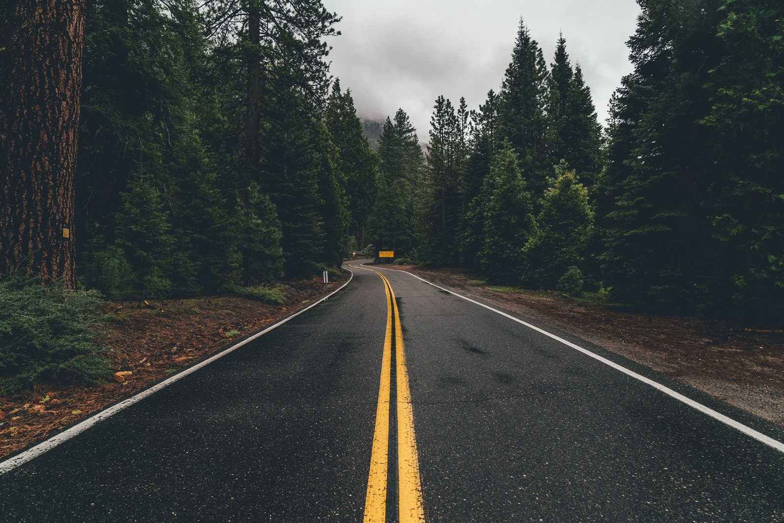 An empty paved road going through a beautiful forested area.