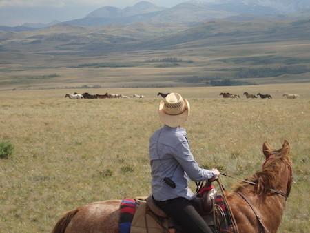 Horses Montana Vacation Ranches