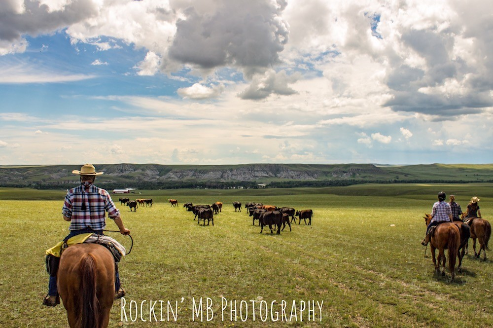 Cattle Drive Vacations | Bear Creek Ranch in East Glacier