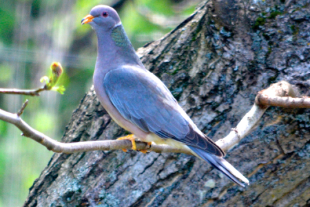 More Birds of Oregon
