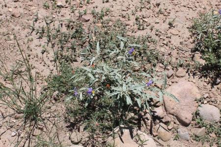 Greening of the Desert