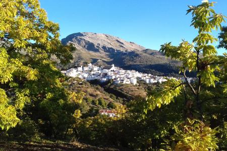 Beautiful Los Castaños