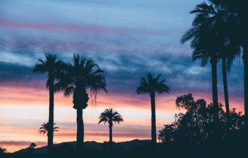 What You Need To Know About The Coachella Valley Preserve