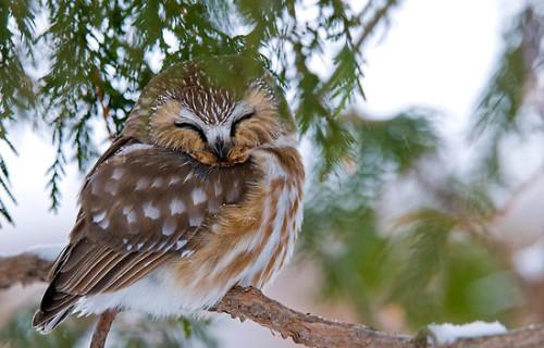 Smoke Detector Bird?