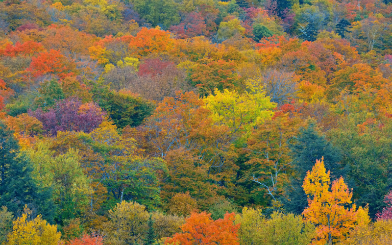 5 Fantastic Places to Enjoy Fall Foliage near Shelburne, Vermont