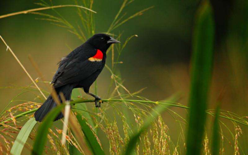 Spring bird migration at Necedah National Wildlife Refuge