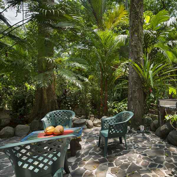Dream Palm House - Terrace View 1