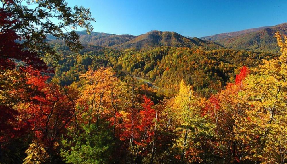 Fall Color Prediction