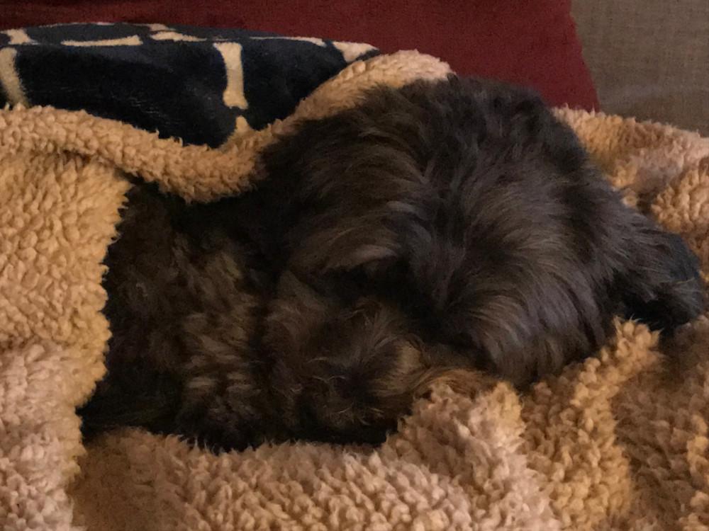 Recent Fur-Baby Guest Luvs the Inn
