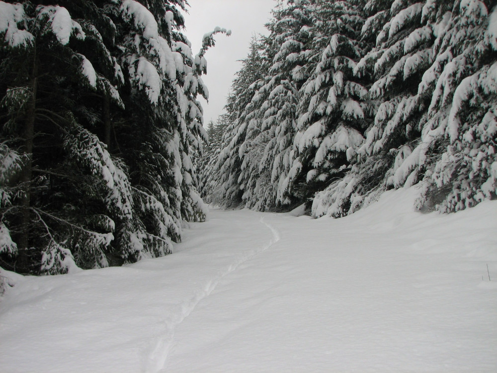 Snowshoe, Cross Country, and Downhill ~ All Near the Old Parkdale Inn