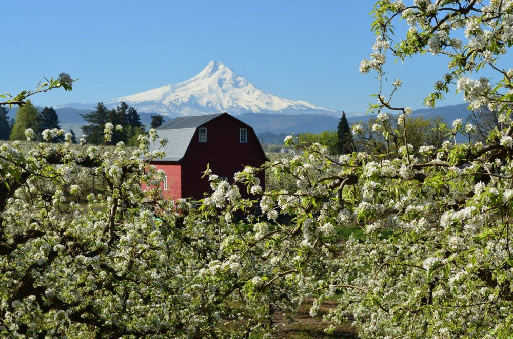 Spring arrives in Hood River, Hood River Valley