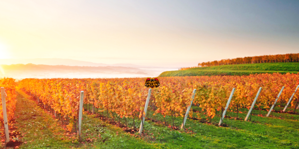 Vermont is for (Wine) Lovers