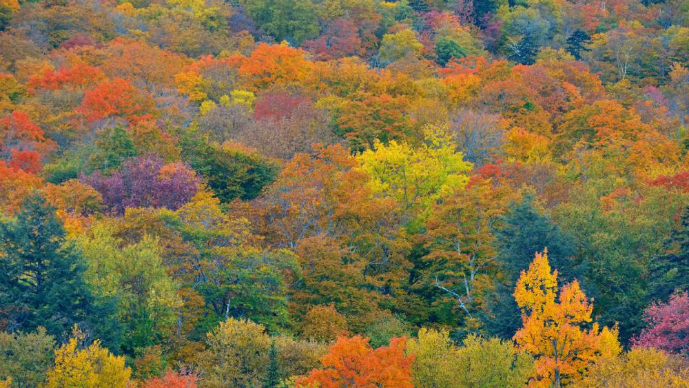 5 Fantastic Places to Enjoy Fall Foliage near Shelburne, Vermont