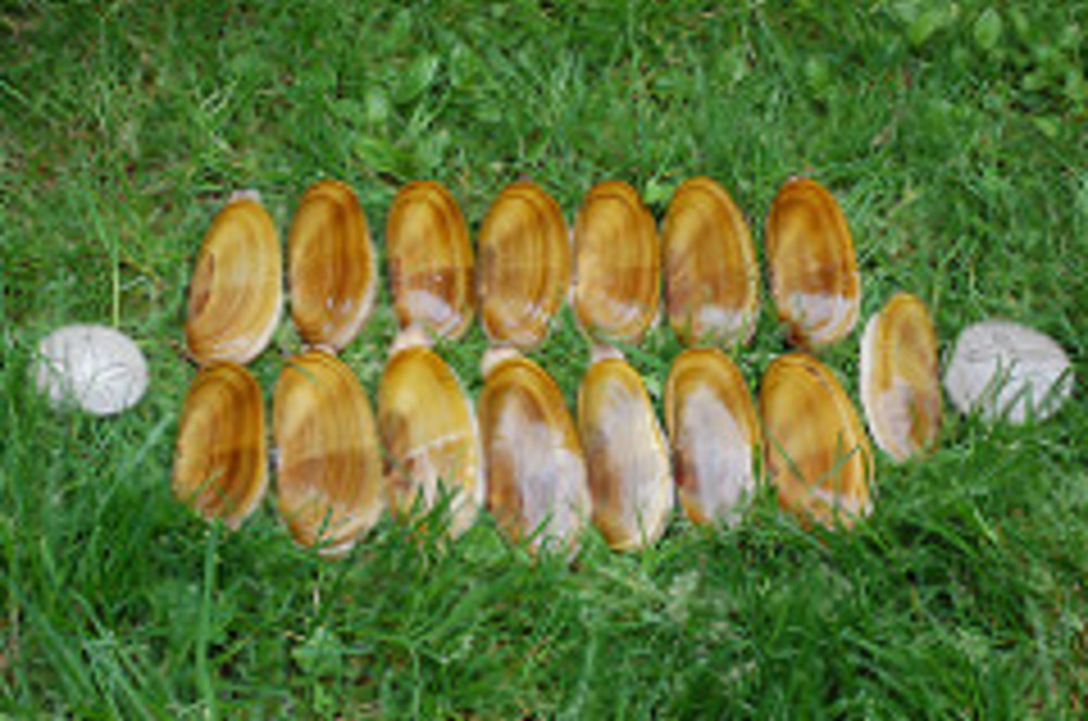 First Razor Clam Tide is on October 17-19, 2008!
