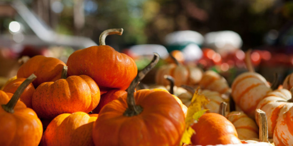 8 Harvest Festivals to Attend in the Mid-Willamette Valley