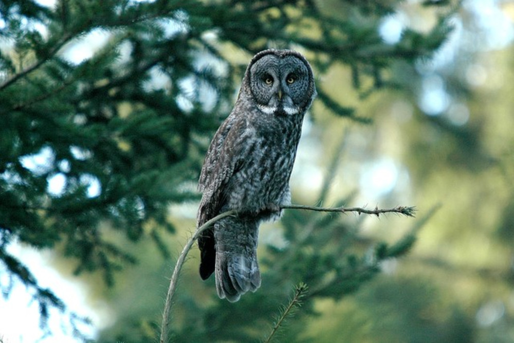 Owl Prowl, Silver Falls State Park