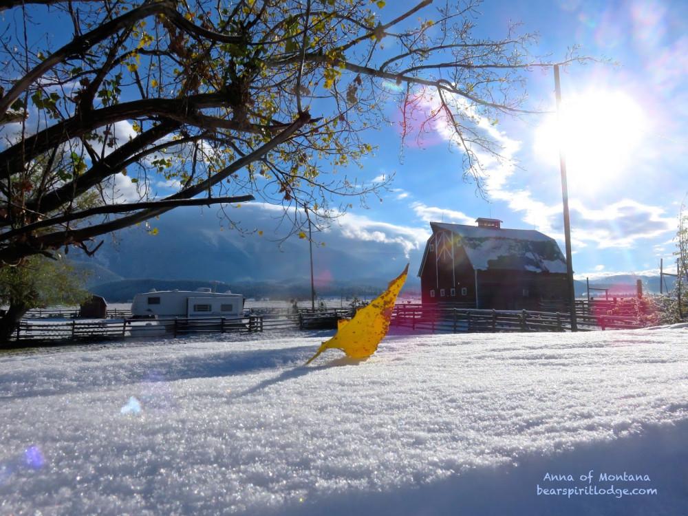 The Fall Season and Winter Previews at Bear Spirit Lodge B&B