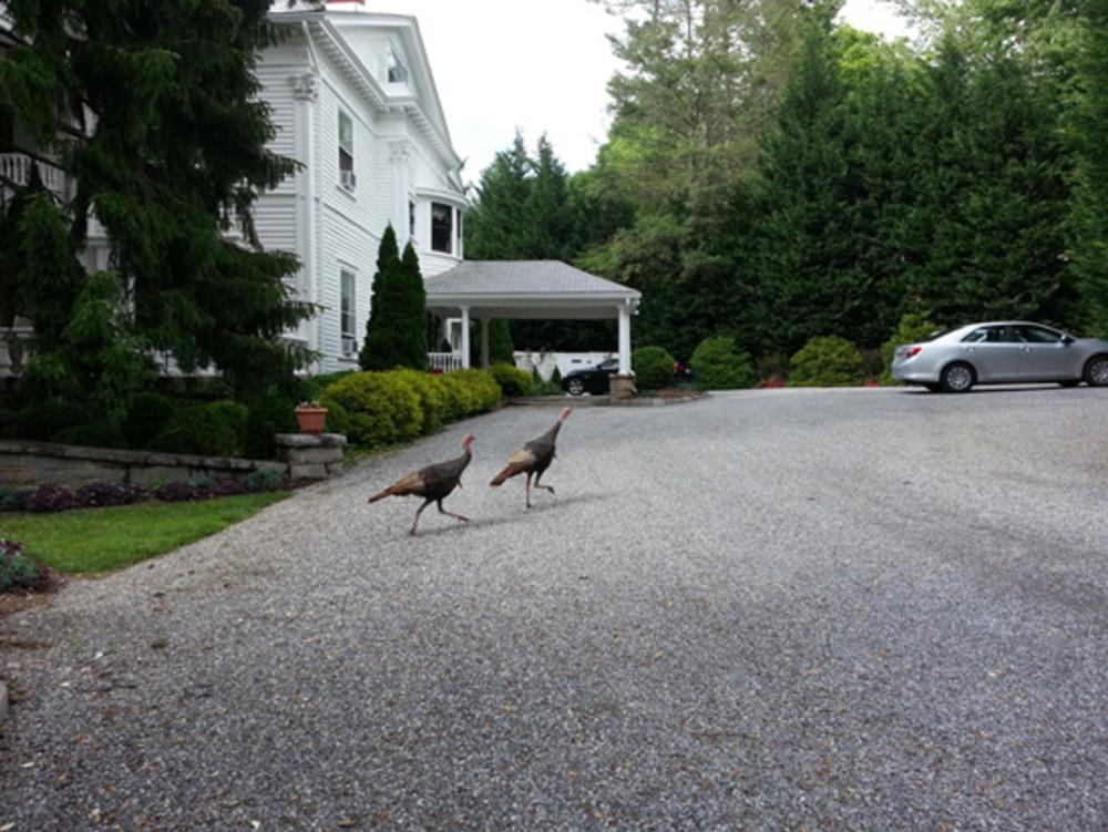We had some wild visitors