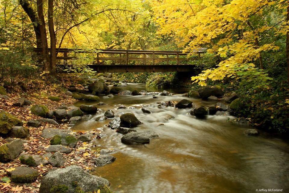 Lithia Park Nature Walks