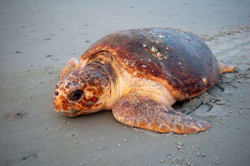 Sea Turtle Monitoring