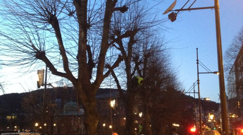 trær - trees