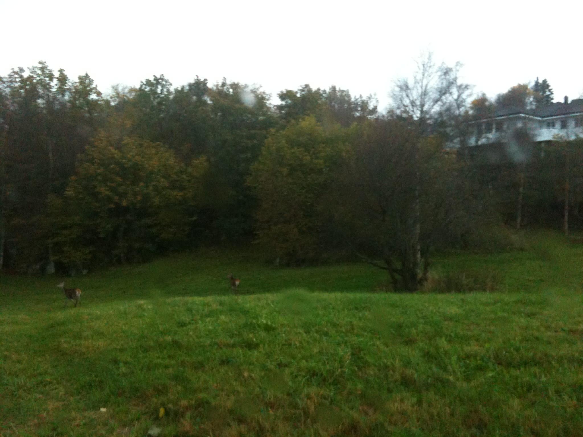 hjort monsamarken tertnes