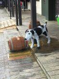 Legoland dog