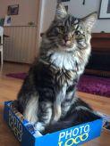 Findus katt