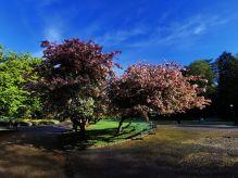 Spring is here|Våren er her