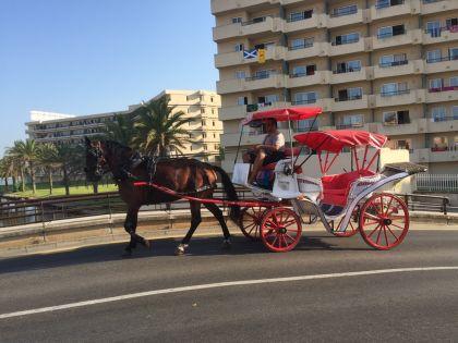 Port Alcudia - horse taxi