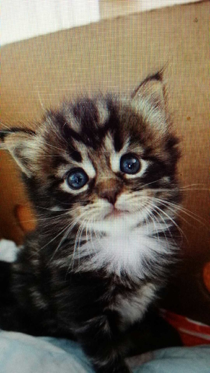 Findus katten