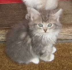 New kitten in the house|Ny kattepus i hus