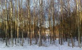 A cold but beautiful day|En kald men herlig dag
