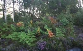 Autumn colors already|Høstfarger allerede
