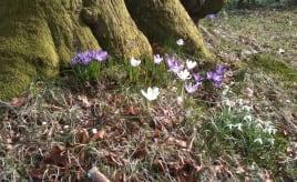 Spring is here Våren er her