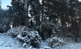 What I like about the winter|Hva jeg liker med vinteren