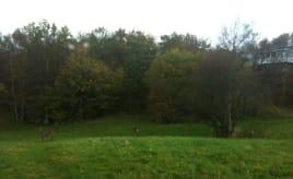 Deer running around on Monsamarken, Tertnes|Hjort på Monsamarken, Tertnes