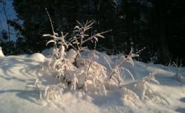 Cold days|Kalde dager