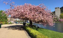 Spring again in Bergen|Endelig vår i Bergen