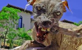 Yet another dog attack|Nok et hundeangrep