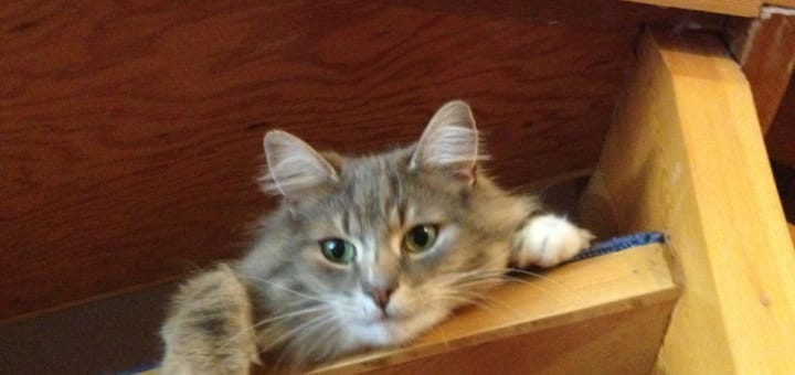 Katten vår - Rolf