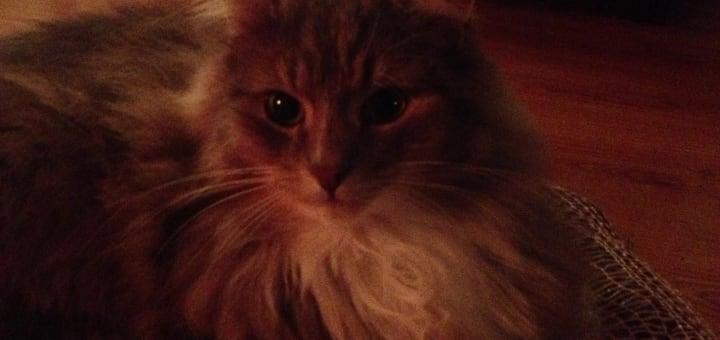 Katten Rolf