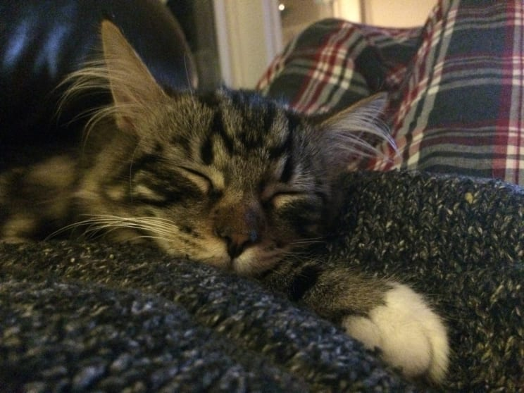 Katt Cat