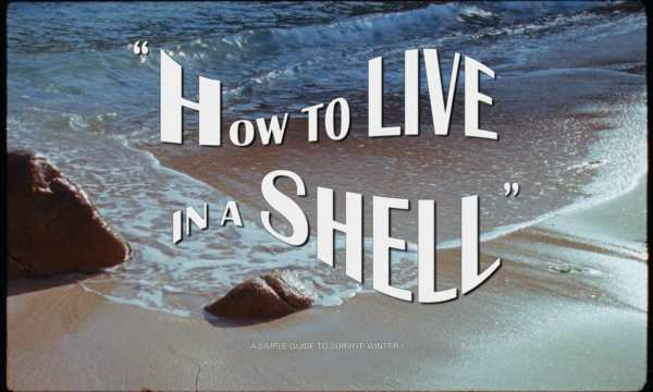 Gimaguas - How To Live In A Shell