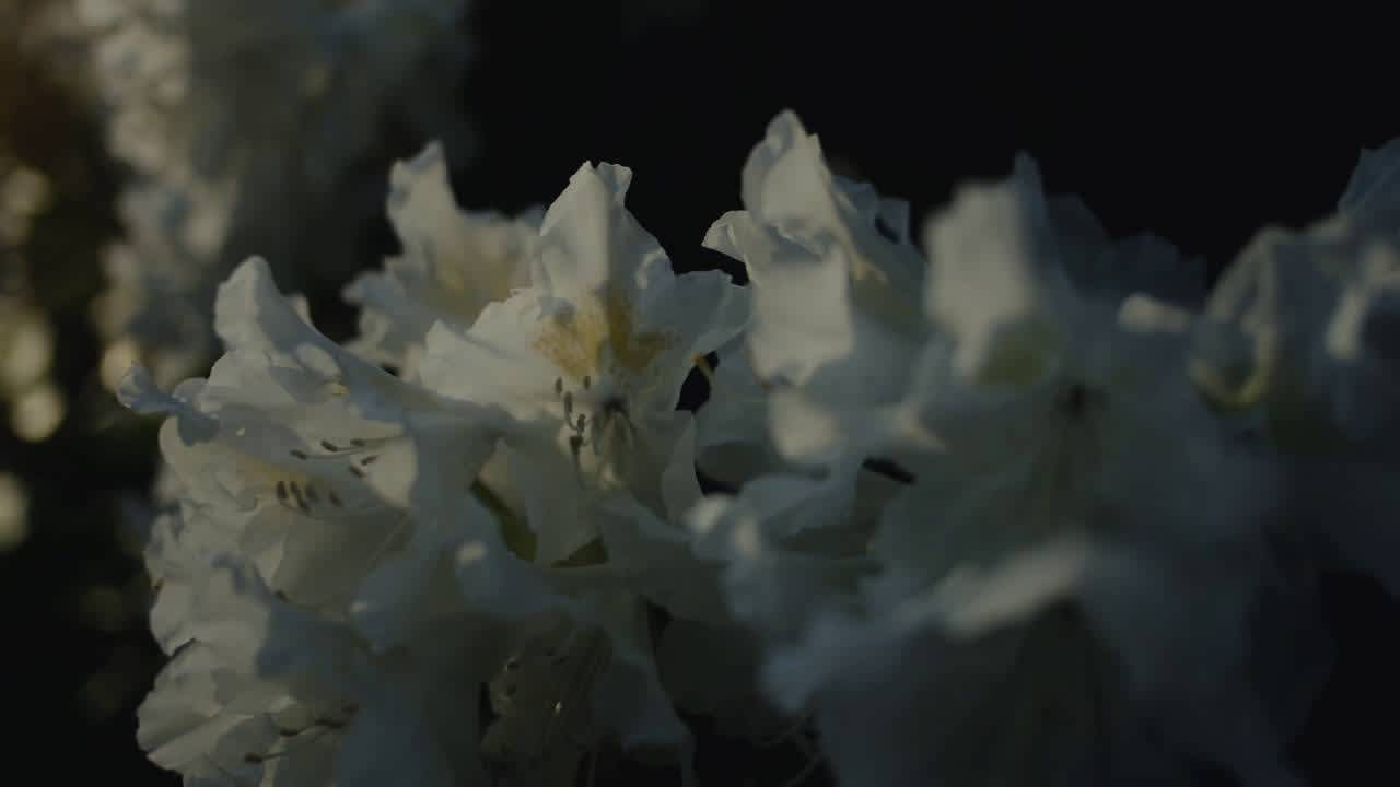 Christian Löffler - Haul feat. Mohna