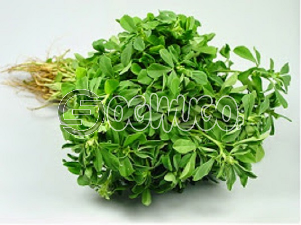 1 big fresh head of water leaf sold at very affordable price used by expertise in production of different type of medicine.Gives your food an attractive look.: unable to load image