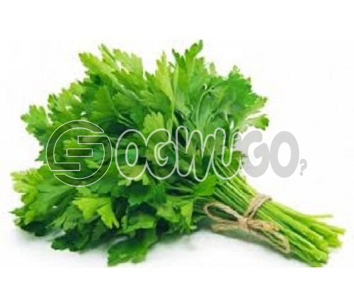 Fresh scent leaf very healthy,affordable sold at 300 naira per head easy to cook .: unable to load image