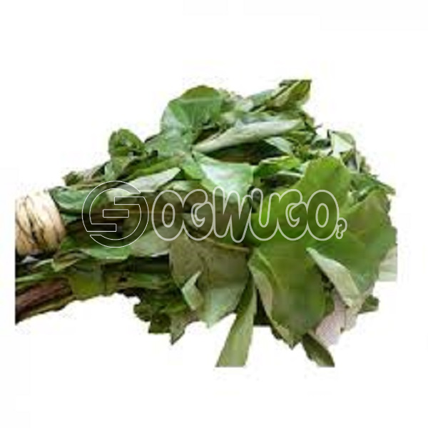 Fresh Oha (Ora) Leaves