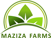 MAZIZA FARMS