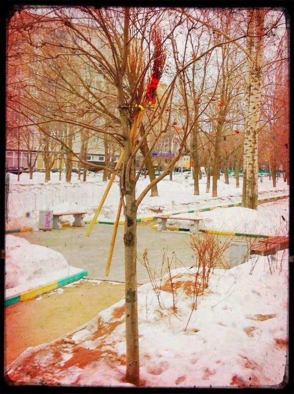 Метла на дереве
